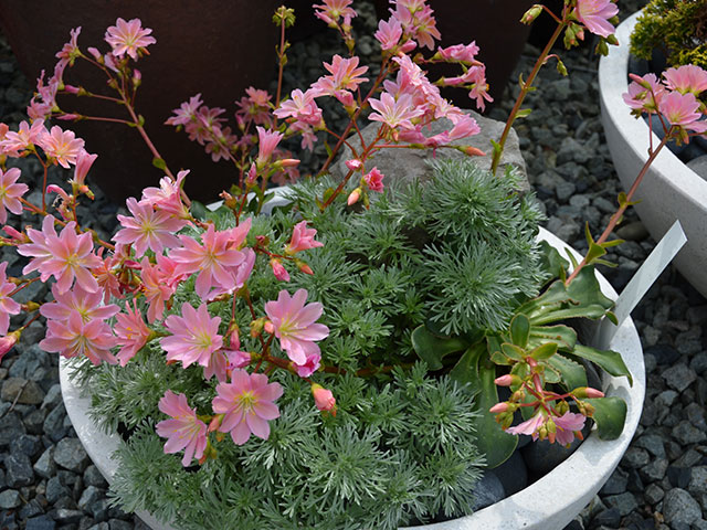 container-flowering-planted-pot